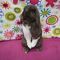 Adopt A Pet :: Adrianna - Scotts Valley, CA
