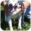 Photo 2 - Jack Russell Terrier Mix Dog for adoption in Somerset, Pennsylvania - Lynn