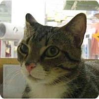 Adopt A Pet :: Do Dad - Jenkintown, PA