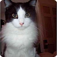 Adopt A Pet :: Darwin - Proctor, MN
