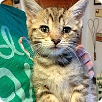 Adopt A Pet :: Regan - Mays Landing, NJ