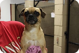 Pug Mix Dog for adoption in Boonsboro, Maryland - Gracie