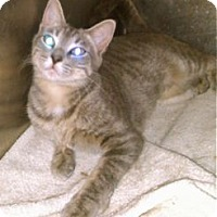 Adopt A Pet :: Peyton - Colorado Springs, CO