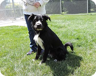 Terrier (Unknown Type, Medium) Mix Dog for adoption in Sioux City, Iowa - PRINCE
