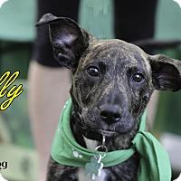 Adopt A Pet :: Gilly - Alpharetta, GA