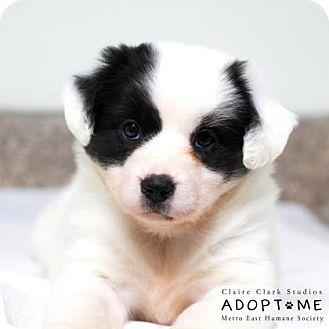 Terrier (Unknown Type, Medium) Mix Puppy for adoption in Edwardsville, Illinois - Panda