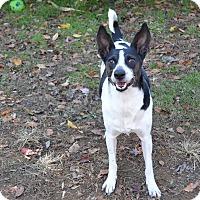 Adopt A Pet :: Buster - Broadway, NJ