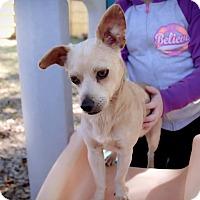 Adopt A Pet :: Cobb - Vidor, TX