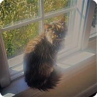 Adopt A Pet :: Suzie - Chicago Heights, IL