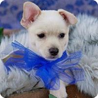 Adopt A Pet :: Curly - Santa Fe, TX