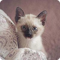 Adopt A Pet :: Arrow - Aurora, CO