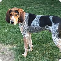 Adopt A Pet :: Cowboy - Joliet, IL
