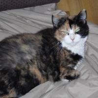 Adopt A Pet :: Peggy - Franklin, NC