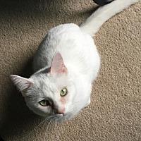 Adopt A Pet :: 3821 Evee - SC - Council Bluffs, IA