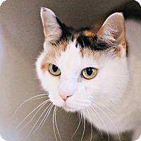 Adopt A Pet :: Star - Lincoln, NE
