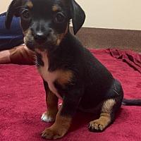 Adopt A Pet :: Lucky - Rancho Palos Verdes, CA