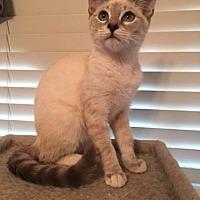 Adopt A Pet :: Rick - Parlier, CA