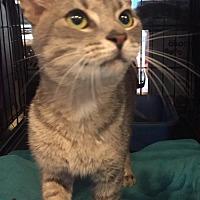 Adopt A Pet :: Battin - Columbus, OH