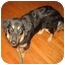 Photo 1 - Australian Shepherd Mix Dog for adoption in Orlando, Florida - McKenna