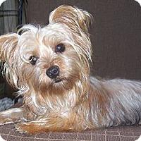 Adopt A Pet :: Lucy - CAPE CORAL, FL
