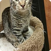 Adopt A Pet :: Sir Thomas - Columbus, GA