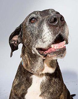 Labrador Retriever Mix Dog for adoption in Midway City, California - Nina