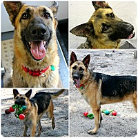 Adopt A Pet :: Melony - Forked River, NJ