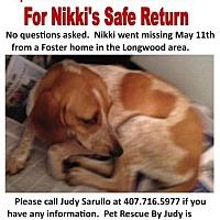Adopt A Pet :: Nikki-  MISSING - Sanford, FL