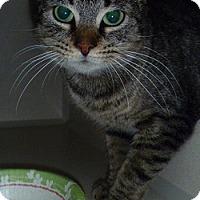 Adopt A Pet :: Pawsby - Hamburg, NY