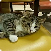 Adopt A Pet :: Storm - Medina, OH
