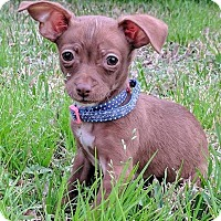 Adopt A Pet :: Winnie - AUSTIN, TX