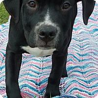 Adopt A Pet :: Sparky-Adopted! - Detroit, MI