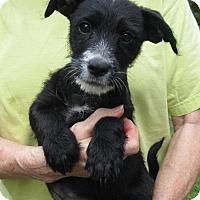 Adopt A Pet :: TSURA - Williston Park, NY