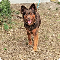 Adopt A Pet :: Coco - Tavares, FL
