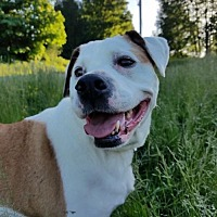 Adopt A Pet :: ROXANNE-SWEETEST LOVING,smart LOYAL family girl - Seattle, WA