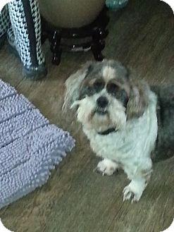 Shih Tzu Mix Dog for adoption in Dothan, Alabama - G-Paw