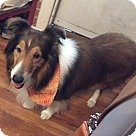 Adopt A Pet :: Louie (Adoption Pending)
