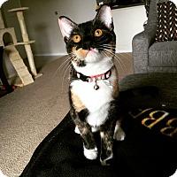 Adopt A Pet :: Emery - Chandler, AZ