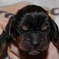 Adopt A Pet :: Junior - New palestine, IN