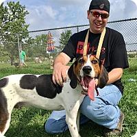 Adopt A Pet :: Turbo - Elyria, OH