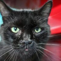 Adopt A Pet :: Zeus - Spartanburg, SC