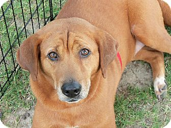 Coonhound (Unknown Type) Mix Dog for adoption in Silver Lake, Wisconsin - Ellinore -Momma