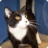 Adopt A Pet :: K-Emery10-Finley - Colorado Springs, CO