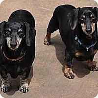Adopt A Pet :: Lucky & Bunny - San Jose, CA