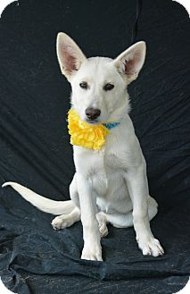 Shepherd (Unknown Type) Mix Dog for adoption in Tool, Texas - Mollie