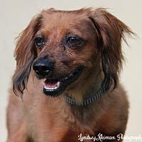 Adopt A Pet :: Jasper - Weston, FL