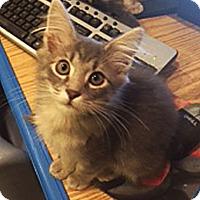 Adopt A Pet :: Charlie Brown - N. Billerica, MA