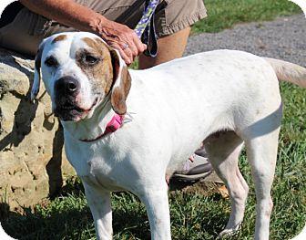 Bulldog/Boxer Mix Dog for adoption in Elyria, Ohio - Tippy