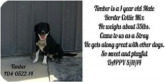 Border Collie Mix Dog for adoption in Greenville, Kentucky - Timber