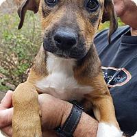 Adopt A Pet :: Zoe - Charlestown, RI